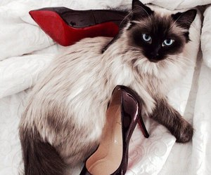 cat, animal, and shoes image