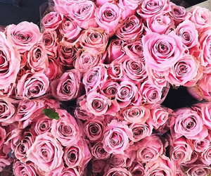 celebration, pink, and roses image