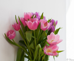 beautiful, spring, and tulips image