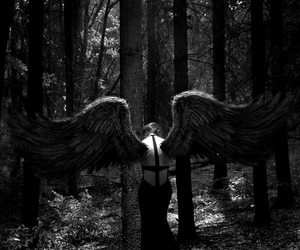 angel, forest, and wings image
