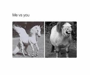 funny, unicorn, and horse image