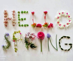 colorful, flowers, and spring image