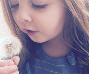 beauty, pure, and dandelion image
