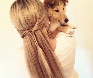 dog, hair, and cute image