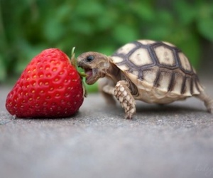 animals, red, and turtle image