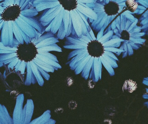 blue, flowers, and grunge image