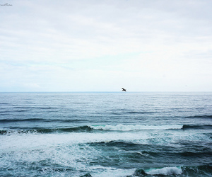 ocean, sea, and nature image