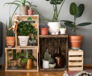 plants, decor, and home image