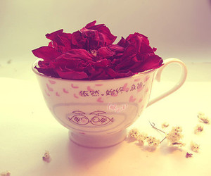 rose, pretty, and cup image