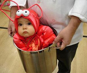 baby, cute, and lobster image