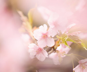 blossom, nature, and flores image