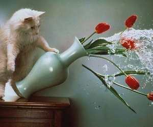 cat, flowers, and tulips image