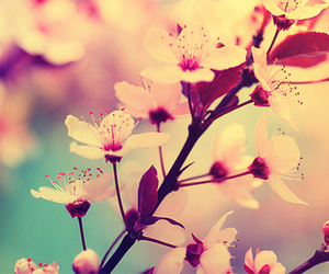 flower, spring, and beautiful image