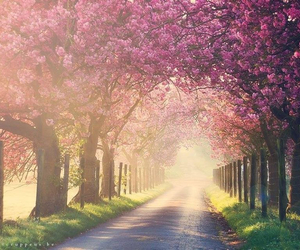 nature, pink, and spring image