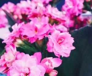 beauty, filters, and floral image