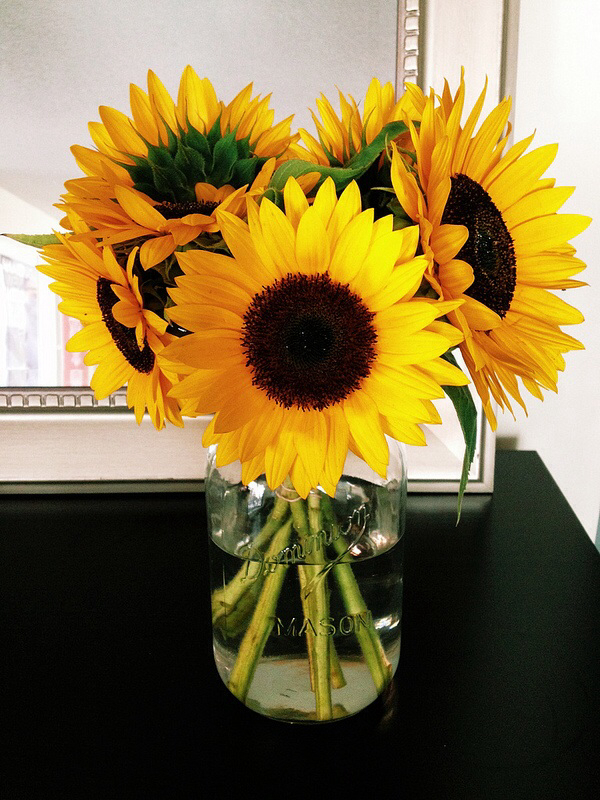 flowers, yellow, and sunflowes image