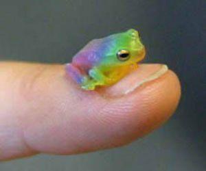 frog, animal, and rainbow image