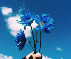 blue, flowers, and sky image