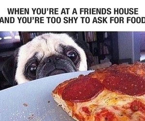 pizza, funny, and dog image