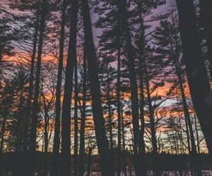 life, iandscape, and wood image