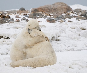 hugs, polar bears, and love image