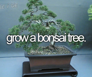 before i die, bonsai, and tree image