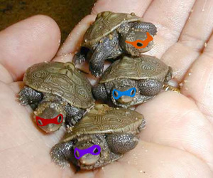 ninja turtles image