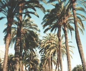 palm trees and road image