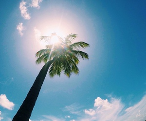 palm tree, summer, and sun image