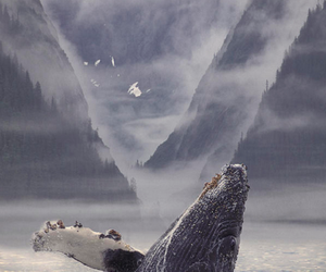 nature, ocean, and whale image