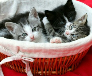 kitten, adorable, and animal image