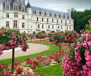 castle, flowers, and france image