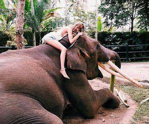 elephant, girl, and summer image