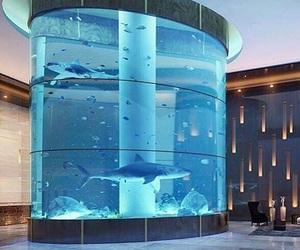 house, fish, and shark image