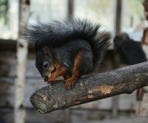 animals, squirrel, and zoo image