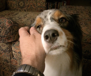 dog, home, and hands image