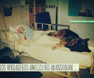 dog, amigos, and frases image