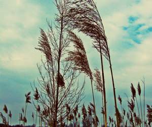 nature, sky, and wind image