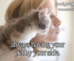 pet, love, and kitten image