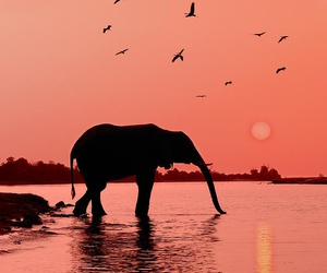elephant, sunset, and animal image