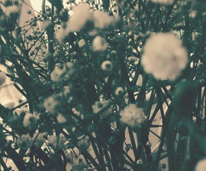 baby's breath, flowers, and texture image