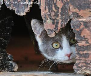 baby animals, cats, and cute animals image
