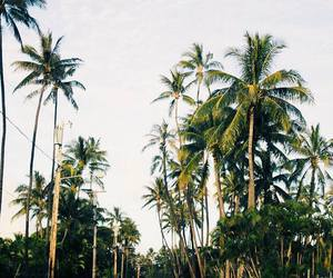 nature and palm trees image
