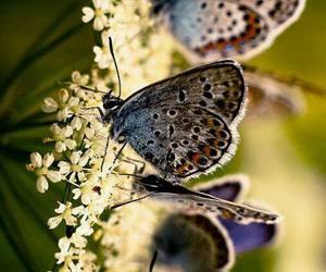 butterflies image