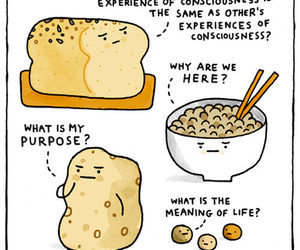food, carbs, and funny image