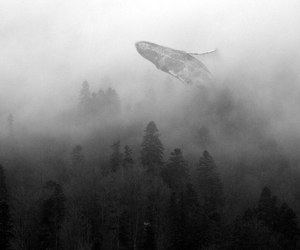 whale, black and white, and nature image