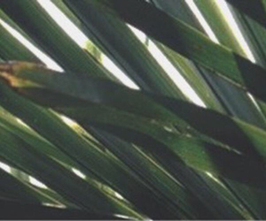 background, green, and header image