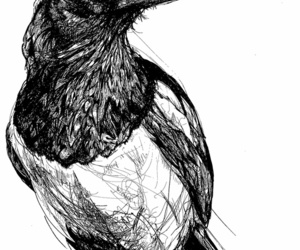 bird, black and white, and illustration image