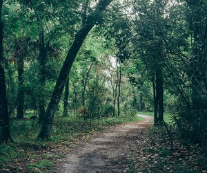 forest, green, and walk image