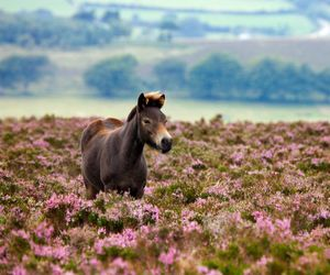 grass, horse, and nature image